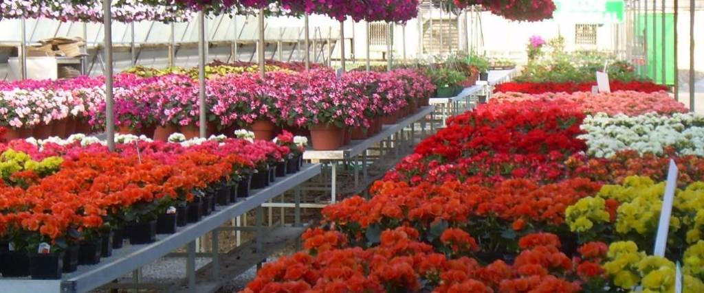 Flower farm otten brothers garden center long lake mn the flower farm by otten bros is conveniently located three miles west of delano on us hwy 12 mightylinksfo